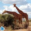 Giraffes Jigsaw Puzzle