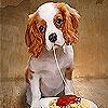 Glutton dog slide puzzle