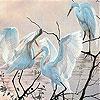 Gracious birds slide puzzle