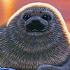 Gray little seal slide puzzle