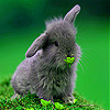 Gray rabbit in garden slide puzzle