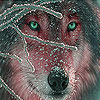 Gray wolf in the snow slide puzzle