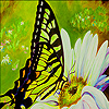 Green butterfly and daisy puzzle