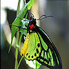 Green butterfly slide puzzle