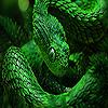 Green copperhead puzzle