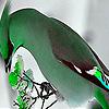 Green elegant  bird puzzle