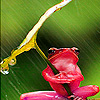 Green frog in the rain puzzle