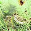 Green garden birds puzzle