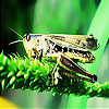 Green grasshopper slide puzzle