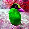 Green little bird slide puzzle