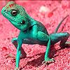 Green lizard in the desert  puzzle