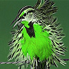Green silly bird slide puzzle