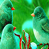 Green sparrows puzzle