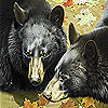 Grizzly bears  hibernation puzzle