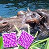 Happy Hippo Pairs