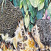 Hedgehogs at home puzzle