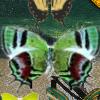 Hidden 120 Butterflies 2