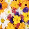 Hidden Spot-Flowers