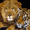 Hidden Spots-Wild Animals
