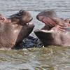 Hippos Slider Puzzle