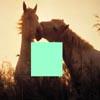 Horse In Love Sliding