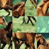 Horses Sliding