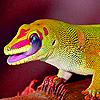 Hungry alone iguana puzzle