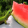 Hungry chameleons slide puzzle