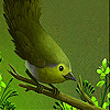 Hungry goldcrest slide puzzle