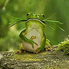 Hungry green frog slide puzzle
