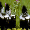 Hungry skunks slide puzzle