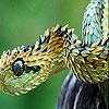 Hunter snake slide puzzle
