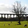 Jigsaw: Aqueduct Sheep