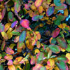 Jigsaw: Autumn Leafs
