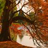 Jigsaw: Autumn Pond Tree