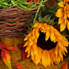 Jigsaw: Autumn Sunflower