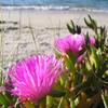 Jigsaw: Beach Flowers