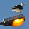 Jigsaw: Bird Light