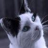Jigsaw: Blue Eyes