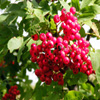 Jigsaw: Bright Berries
