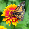 Jigsaw: Butterfly on Flower