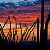 Jigsaw: Cactus Sunrise