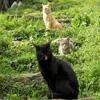 Jigsaw: Cats Trio
