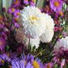 Jigsaw: Chrysanthemum