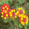 Jigsaw: Colorful Flowers