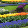 Jigsaw: Colorful Garden