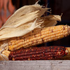 Jigsaw: Corn Cobs