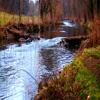 Jigsaw: Creek