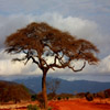 Jigsaw: Desert Tree