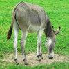 Jigsaw: Donkey